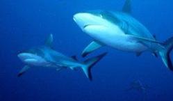 Vasca squali