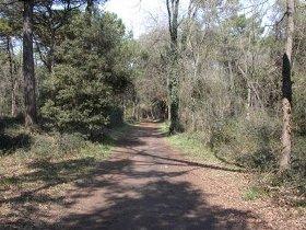 Pineta Ravenna