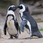 pinguini al Parco Le Navi Cattolica