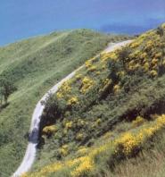 Sentiero sul Monte San Bartolo